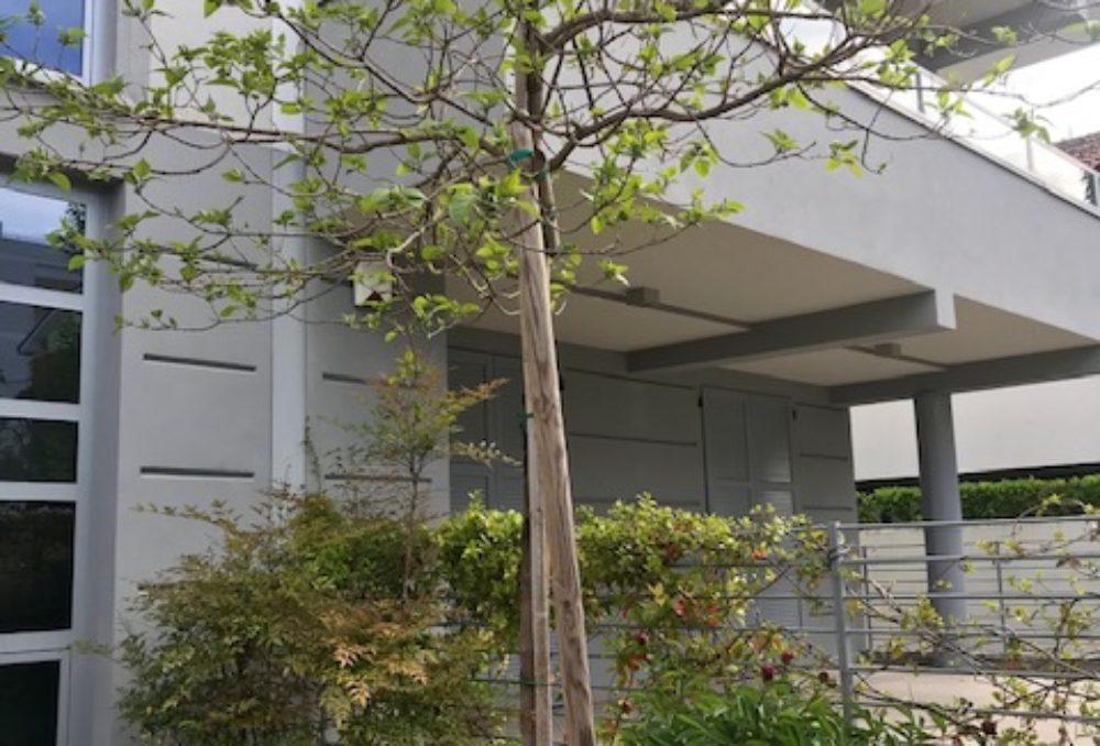 Magnifico appartamento con giardino ed ingresso indipendente