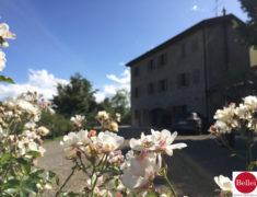 宏伟的乡村修复插入 Nirano 酱自然公园